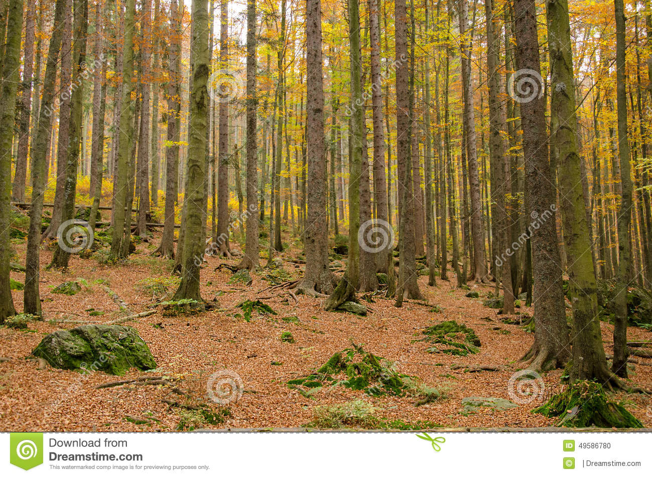 Autumn. Germany, Bavarian Forest Stock Photo.