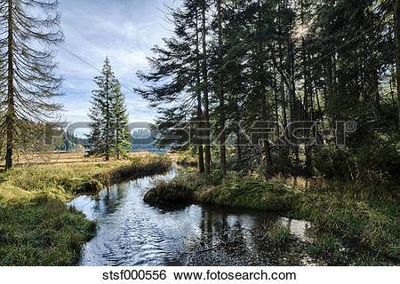 Stock Images of Germany, Bavaria, Bavarian Forest National Park.