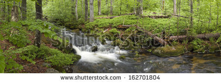 Bavarian Forest National Park Stock Photos, Royalty.