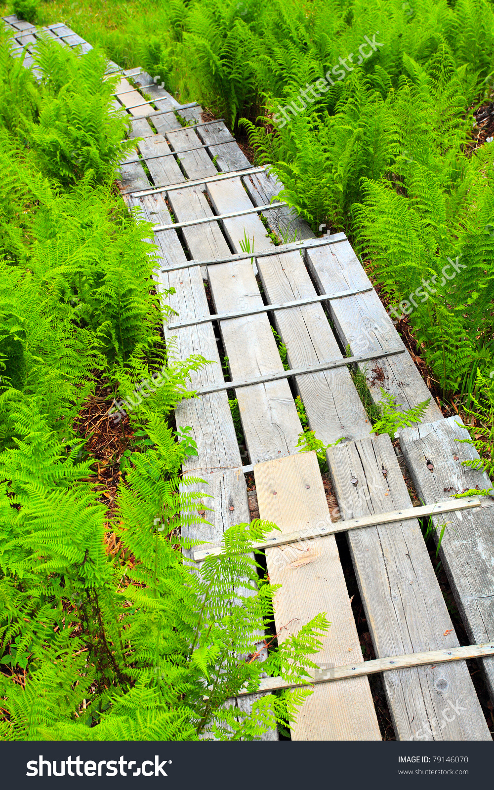 Wooden Sidewalk Over A Peat.