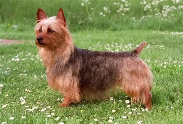Honden Liefhebber.