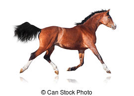 Bay horse Images and Stock Photos. 7,555 Bay horse photography and.