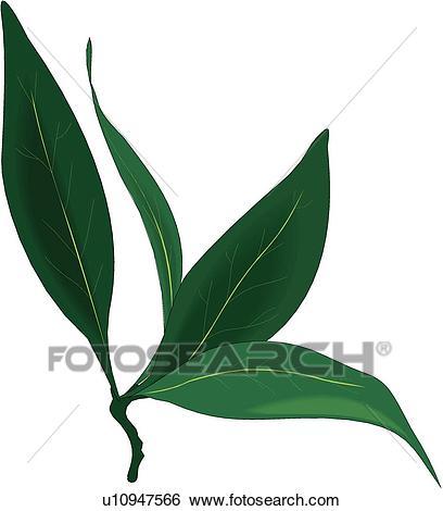 Bay Leaves Clip Art.