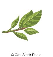 Bay leaves Illustrations and Clipart. 2,697 Bay leaves royalty free.