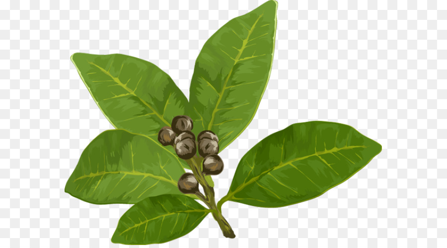 Basil Leaf png download.