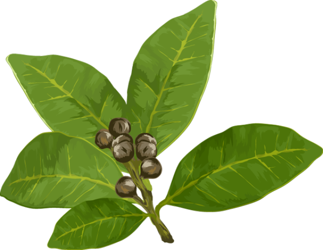 Bay leaf clipart.