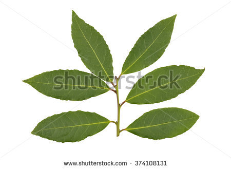 Bay leaf clipart clipground - Cook bay leaves ...