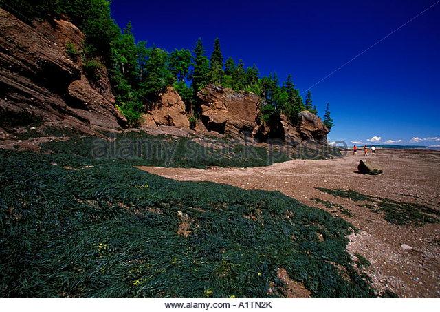 Hopewell Rocks Sandstone Bay Fundy Stock Photos & Hopewell Rocks.