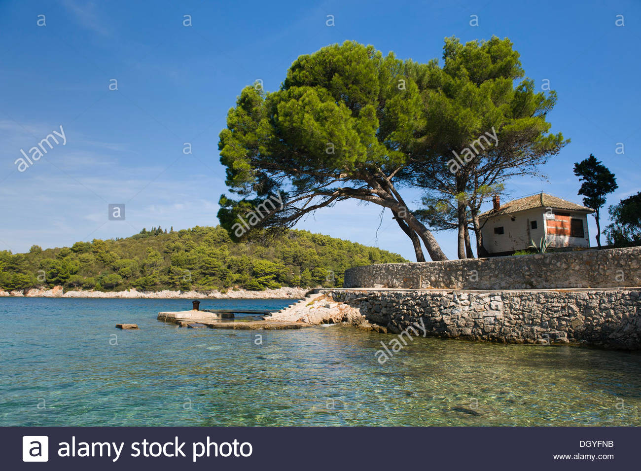 Bay With A Pine Tree Near Valdarke, Mali Losinj, Losinj Island.