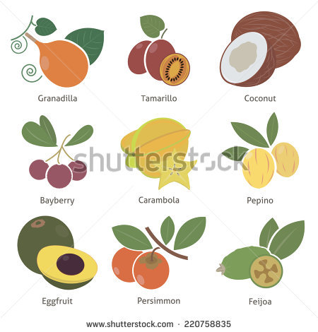 Bayberry Stock Vectors & Vector Clip Art.