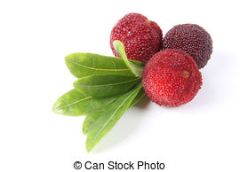 Picture of Red bayberry fruits.