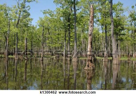 Louisiana Bayou Clipart.