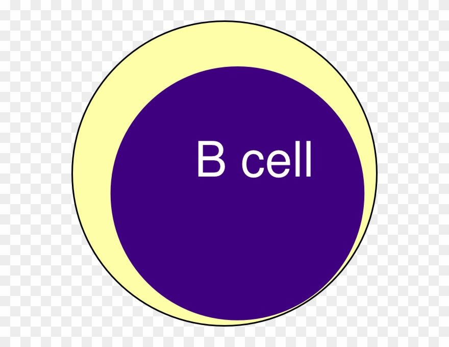B Cell Clipart.