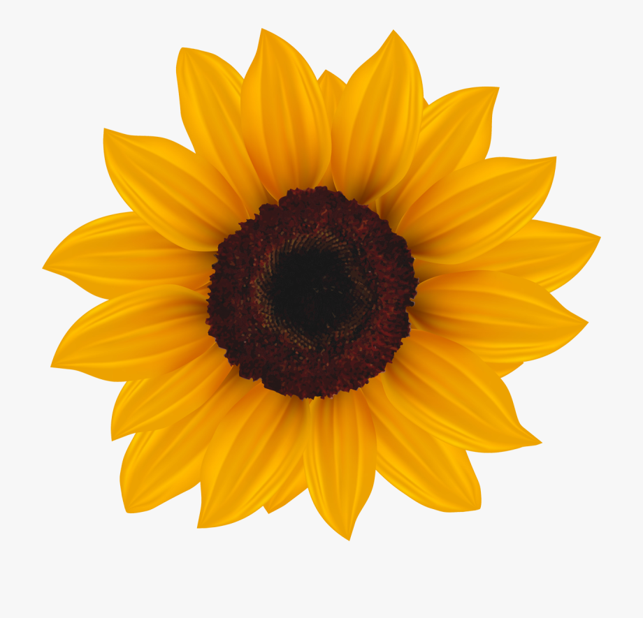 Common Sunflower Clip Art.