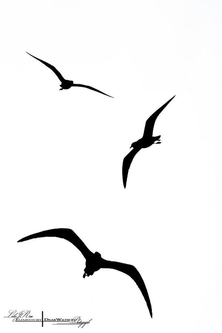 Flying Bird Silhouette Clipart.