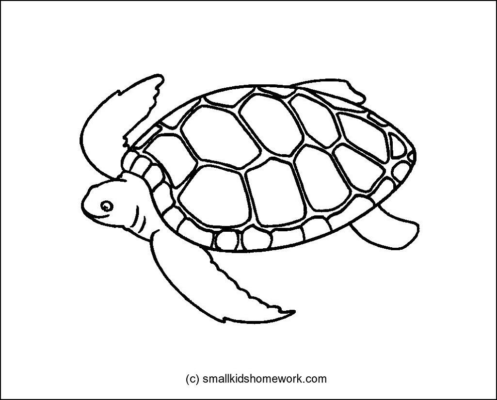 Printable: Turtle Outline Clip Art Beach.