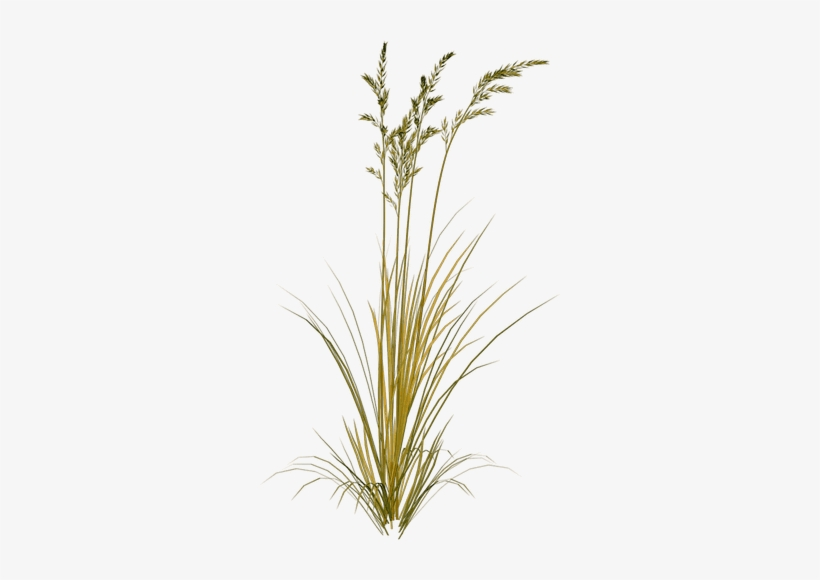 Picture Library Download Beach Grass Clipart.