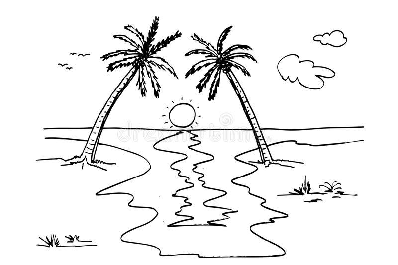 Beach Grass Stock Illustrations.