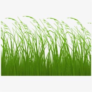Sea Grass Clipart Sea Wallpaper.