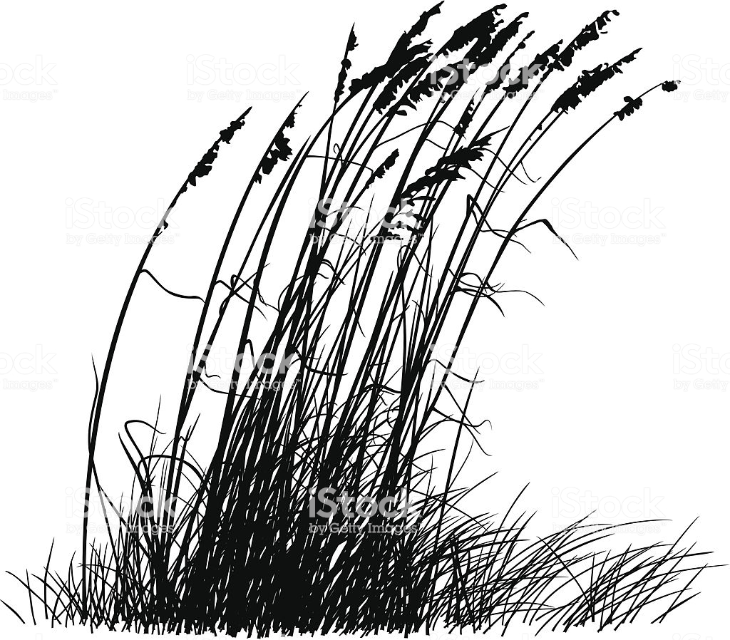 Beach Grass Silhouette Stock Illustration.