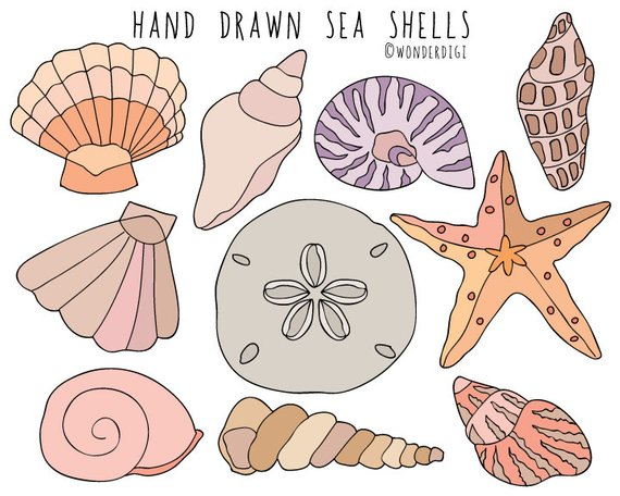 Sea Shells clipart.