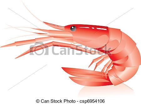 Shrimp Illustrations and Stock Art. 6,105 Shrimp illustration and.