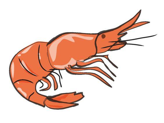 Shrimp Graphic Art.