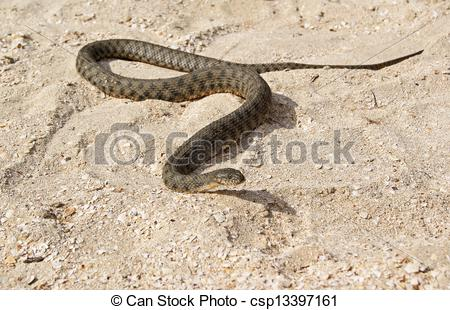 Stock Image of A Snake on the Beach.