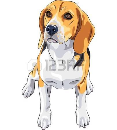 2,026 Beagle Stock Vector Illustration And Royalty Free Beagle Clipart.