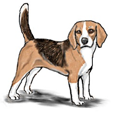 Free Beagle Dog Clipart.