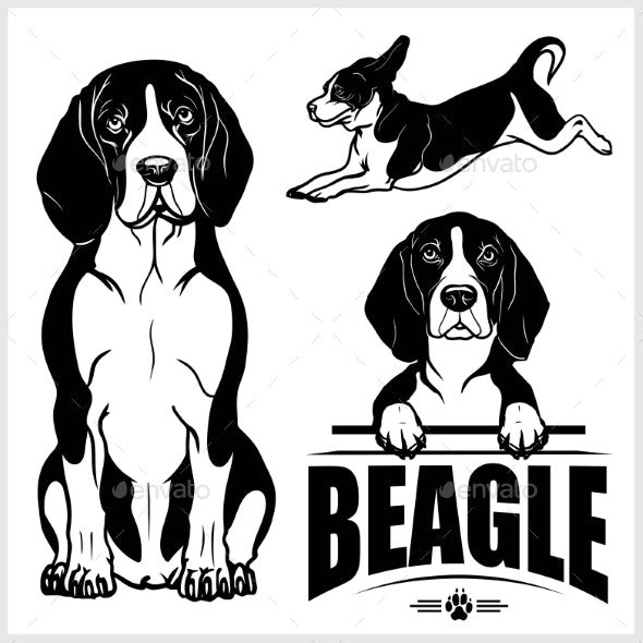 Beagle Dog Vector Set.
