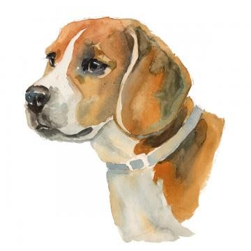 Beagle Png, Vector, PSD, and Clipart With Transparent Background for.