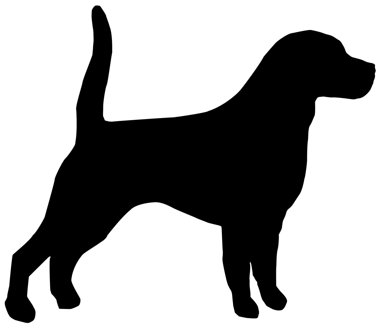 Beagle Bloodhound English Mastiff Affenpinscher Puppy.
