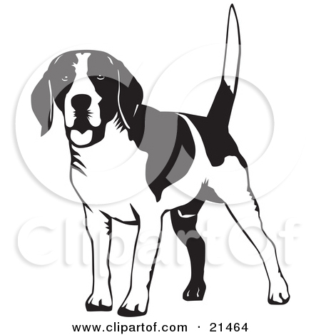 Clipart Illustration of a Happy Beagle Dog Wagging His Tail, On A.