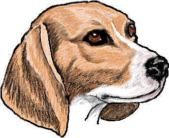 Beagle head clipart.