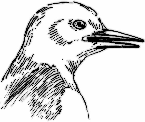 Free Beak Cliparts, Download Free Clip Art, Free Clip Art on.