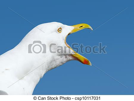 Stock Photos of Angry squawking seagull with beak wide open.