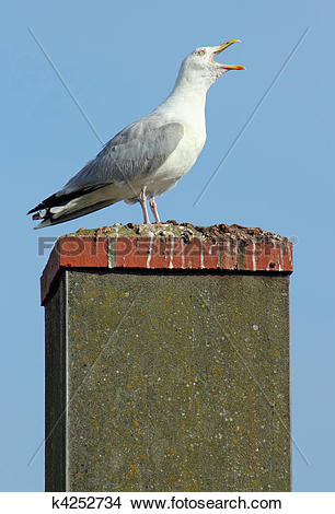 Stock Photo of Noisy seagull with its beak wide open on a chimney.