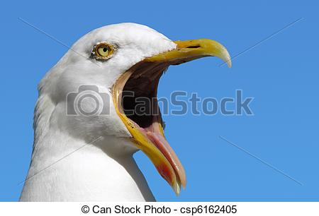 Stock Images of Seagull with its mouth wide open. csp6162405.