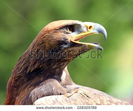 Bird Beak Stock Photos, Royalty.