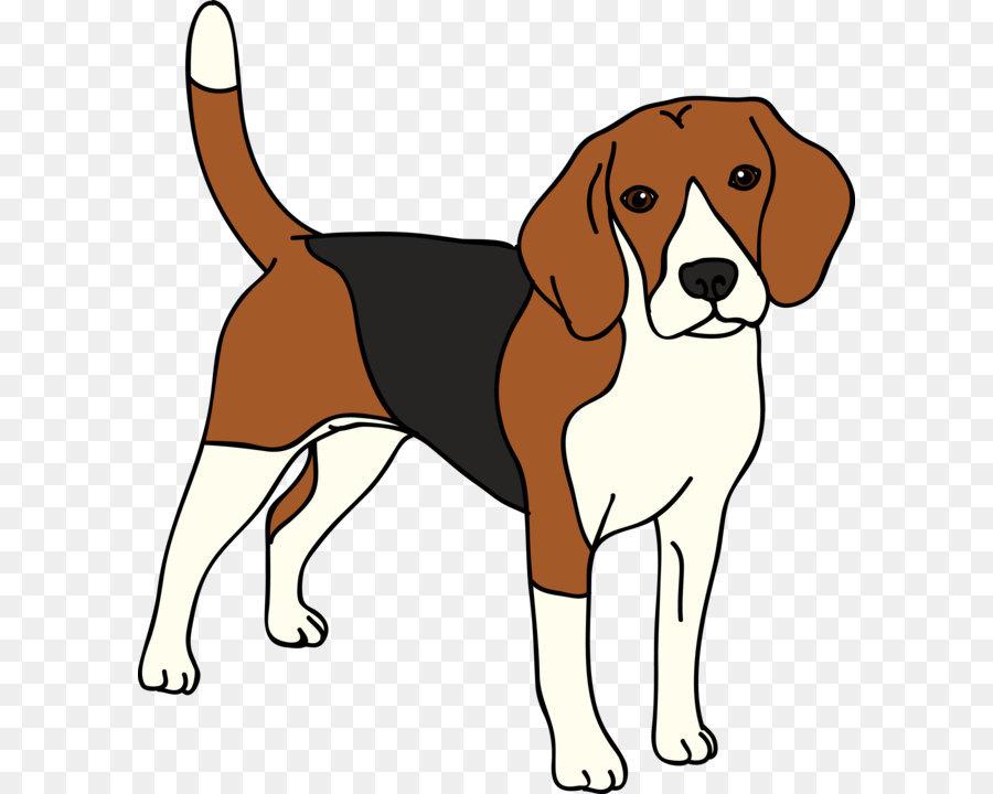 Beagle clipart american foxhound, Beagle american foxhound.
