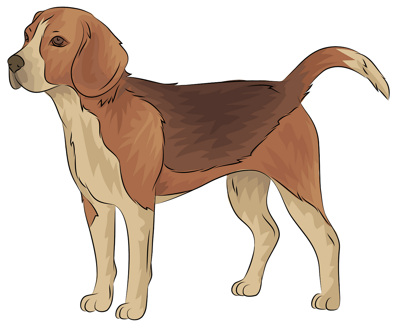Beagle clipart. Free download..