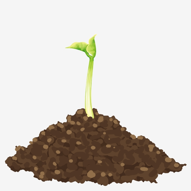 Bean Sprouts, Roots, Fresh Green Plants, Bean Sprouts, Roots, Green.