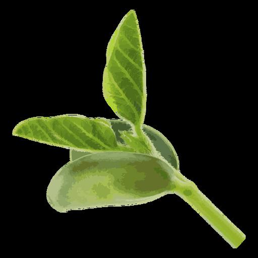 Bean seedling herb illustration.
