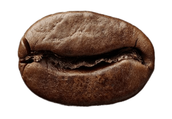 Single Roasted Coffee Bean transparent PNG.