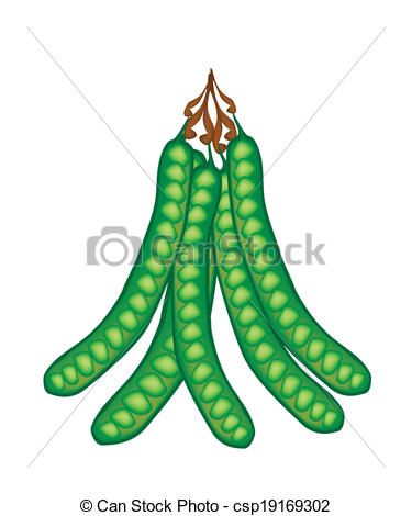 Vector Clipart of A Fresh Tropical Twisted Cluster Bean Pods.