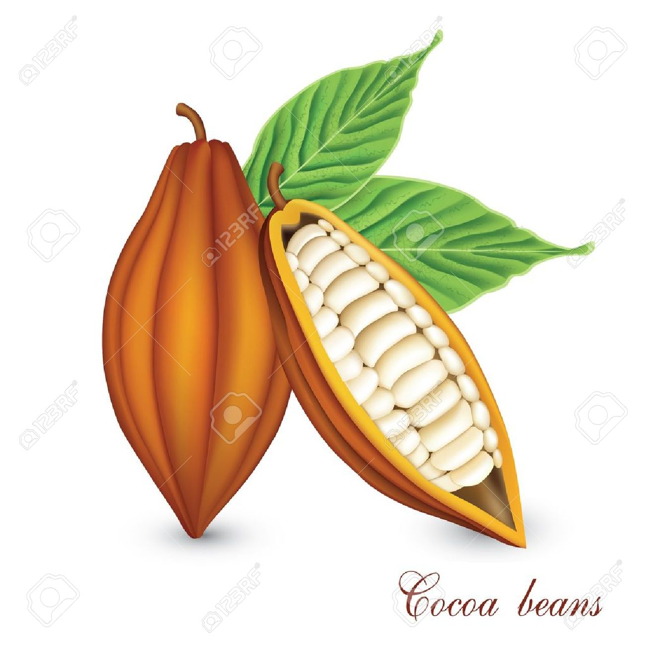2,272 Bean Pod Cliparts, Stock Vector And Royalty Free Bean Pod.