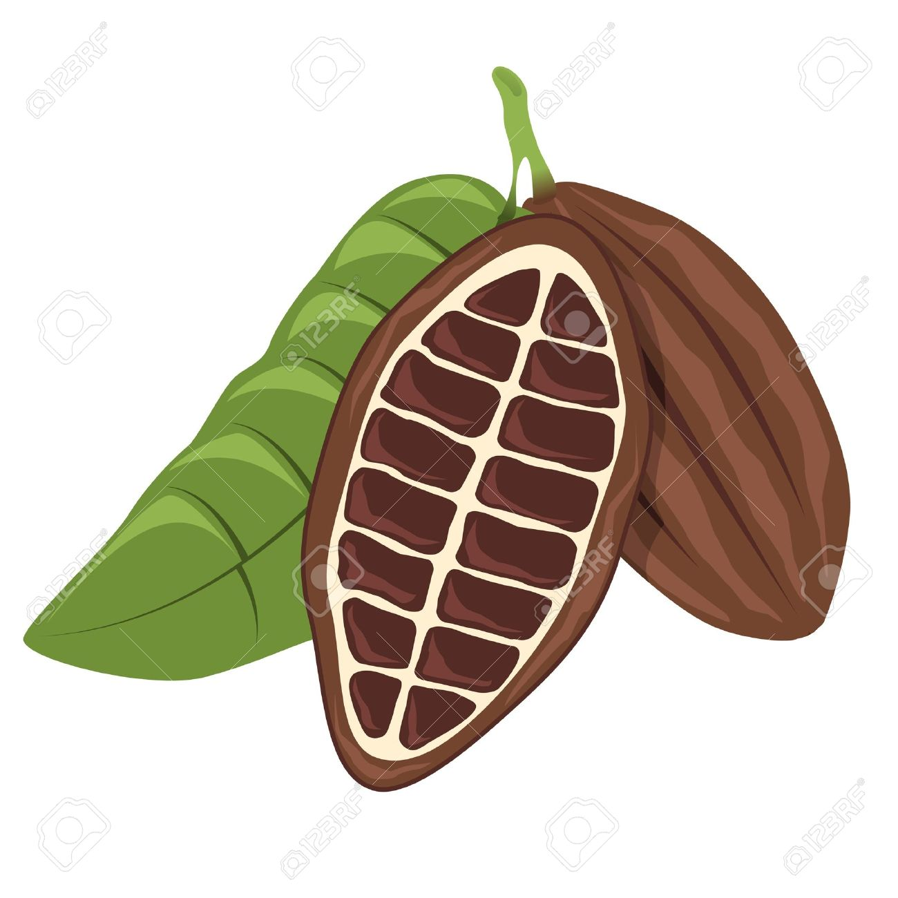 Cacao Bean Royalty Free Cliparts, Vectors, And Stock Illustration.