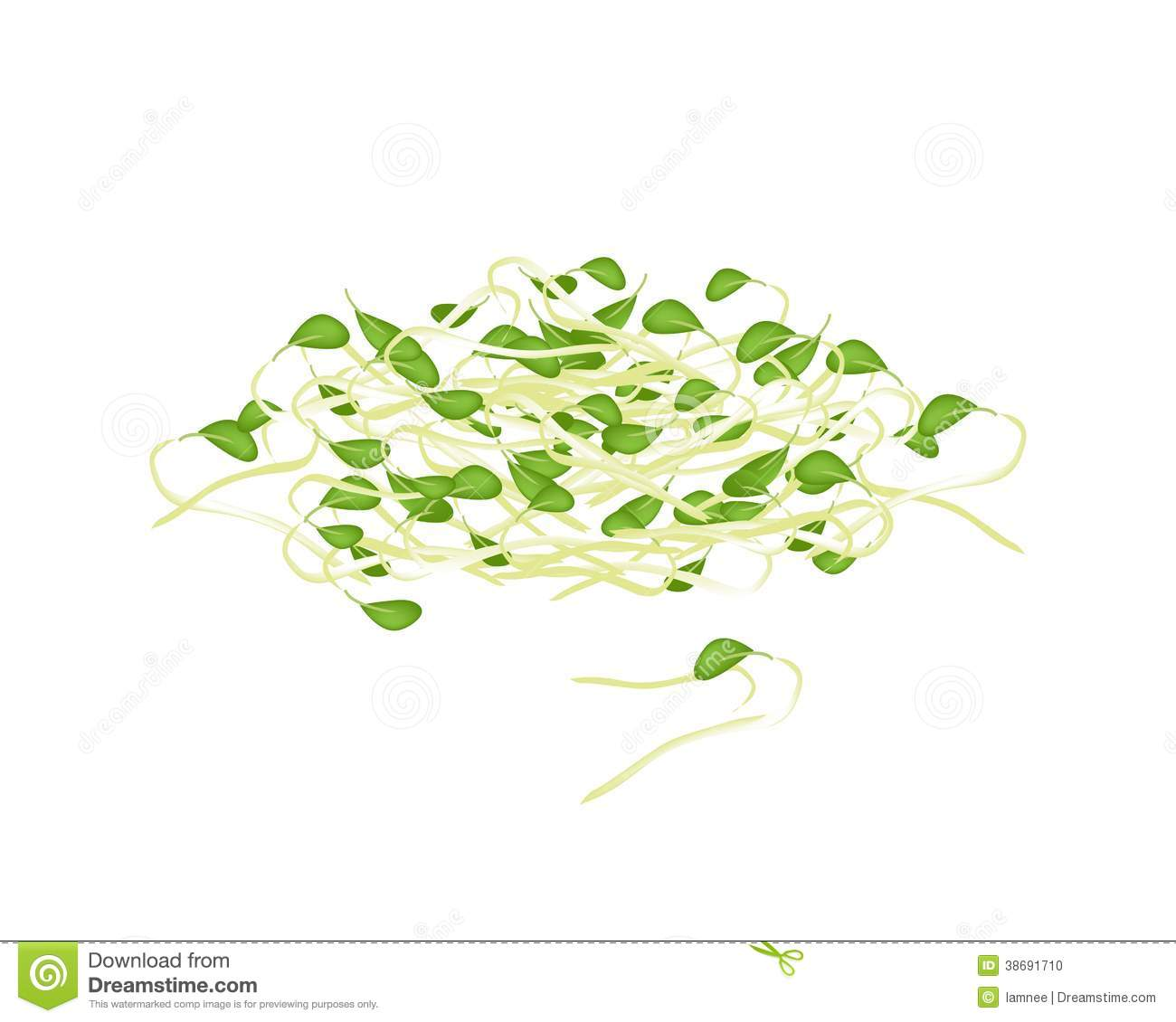 Green bean sprout clipart.