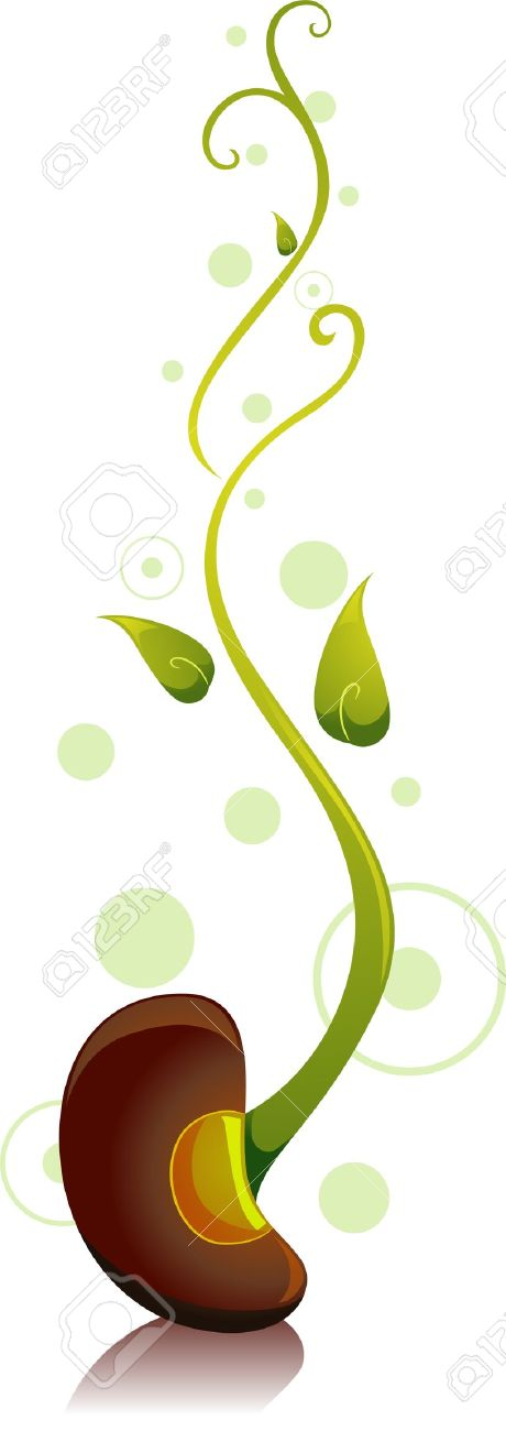 Bean sprout clipart.